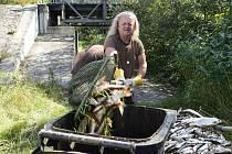 Rybáři nakládají leklé ryby z řeky Bečvy 21. září 2020 v Hustopečích nad Bečvou na Přerovsku. Kvůli neznámé látce, která se předchozího dne dostala do Bečvy na rozhraní Zlínského a Olomouckého kraje, uhynuly v řece tuny ryb