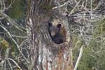 Medvěd, ilustrační foto