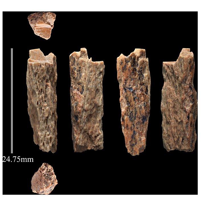 Dvoucentimetrový úlomek kosti denisovana, nalezený v Denisově jeskyni na Sibiři. Nález byl v roce 2016 zveřejněn ve Scientific Reports