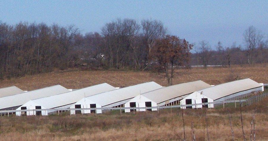 Kožešinové farmy jsou ve Spojených státech velmi populární (na snímku farma ve Wisconsinu). V současnosti však norky vybíjejí
