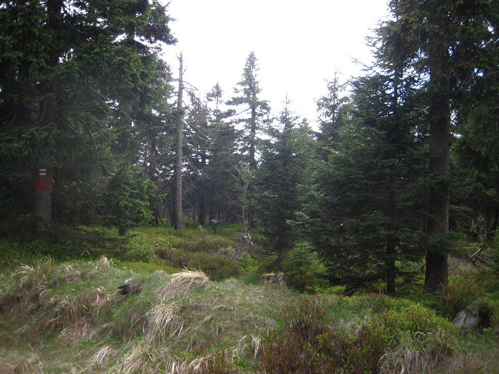 Mezi Velkou a Malou Deštnou se nachází přírodní rezervace Jelení lázeň. Ta chrání vrchovištní rašeliniště s jezírky. V některých místech dosahuje rašelina mocnosti až jeden metr.