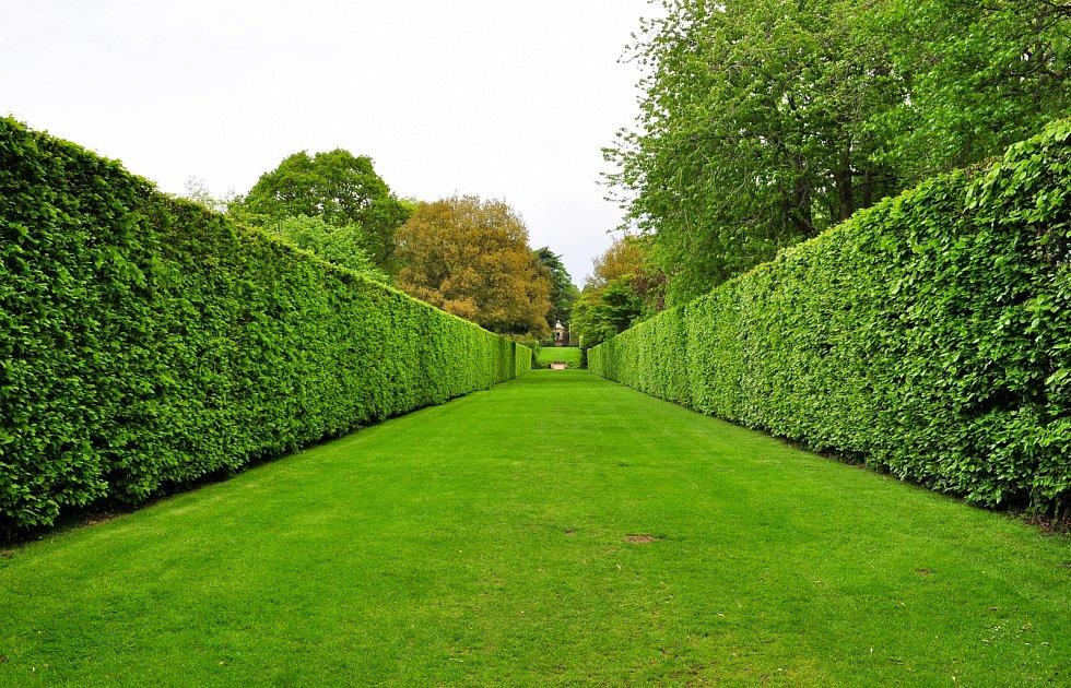 Aby byl živý plot chloubou zahrady, měl by být zdravý a dobře rostlý, což zajistí správný zástřih.