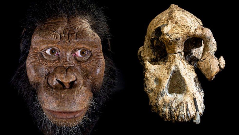 Překvapivě zachovalá, 3,8 milionu let stará fosilie australopitékovy lebky nám nabízí dokonalejší představu o tom, jak vypadal (vlevo umělecká rekonstrukce)