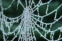 Girlandy zamrzlých pavučin působí téměř magicky, připomínají sněhové vločky. A vědci je dokázali rozeznít