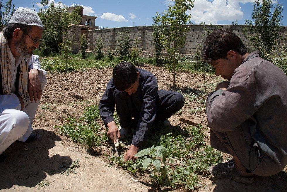 Člověk v tísni zajišťuje afghánským rodinám lepší obživu.