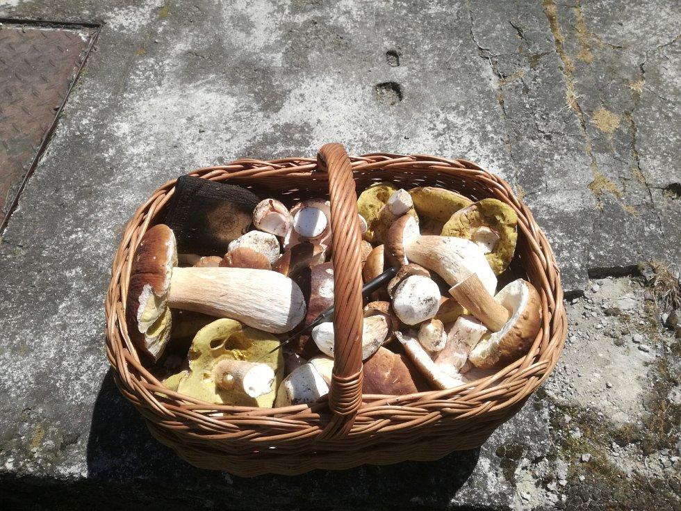 Kromě hřibovitých hub se na Šumavě daří i liškám.