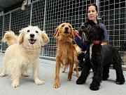 Na poli, kde má útulek pro psy stát, se zatím provádějí přípravné práce.