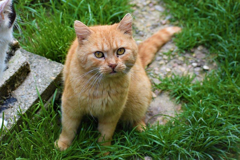 Kočičí útulek Mňau SOS v Chocni