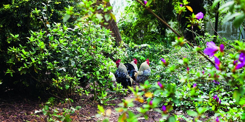 Permakulturní zahrada