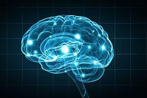 Mozek - ilustrační foto.