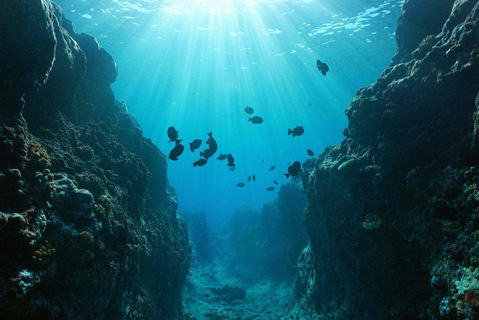 Život v Tichém oceánu je bohatý.