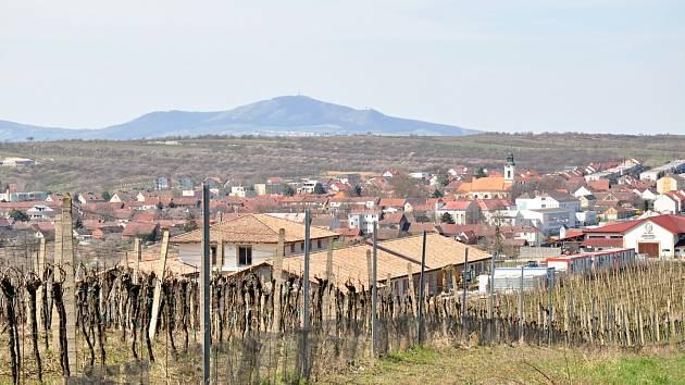 Vinice ve Velkých Pavlovicích.