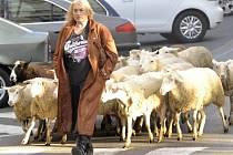 Závěrečná scéna celovečerního dokumentu režisérky Jitky Němcové o zpěvačce a textařce Zuzaně Michnové (na snímku) se 6. října natáčela v Praze na Vinohradské ulici a vedle Michnové v ní účinkovalo 20 ovcí.