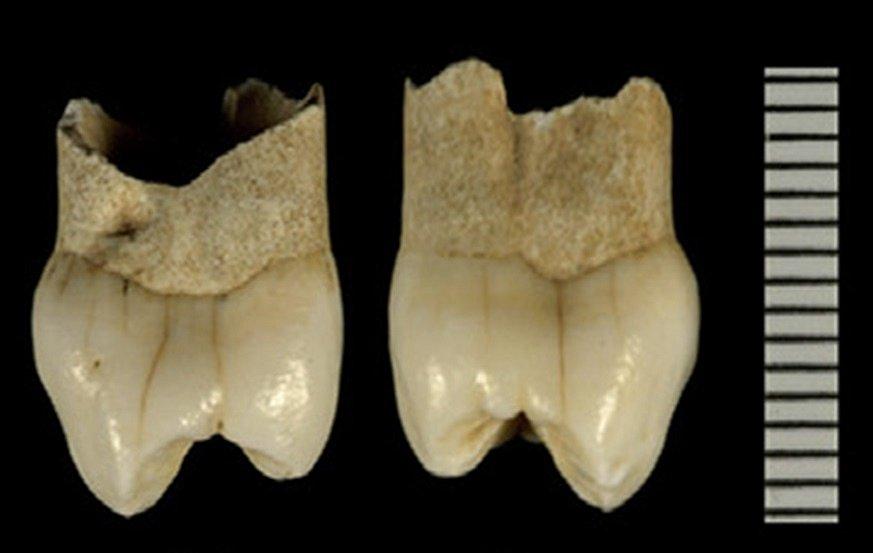 Další dětský neandertálský zub z jeskyně z jeskyně Wezmeh
