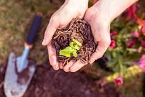 Zahradnictví. Ilustrační foto.