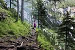 Alpská stezka.