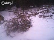 Fotografie vlků v Lužických horách, které zachytila fotopast
