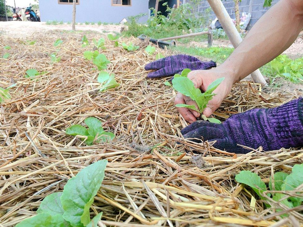 Skvělou metodou, jak pomoci zachovat kyprou půdu, je mulčování například slámou nebo senem.