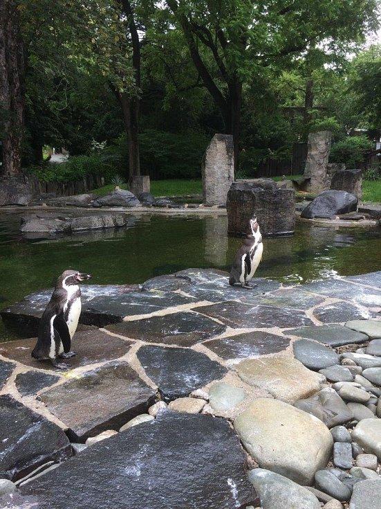 Pavilon tučňáků