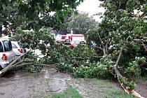 Popadané stromy po bouřce v Přerově