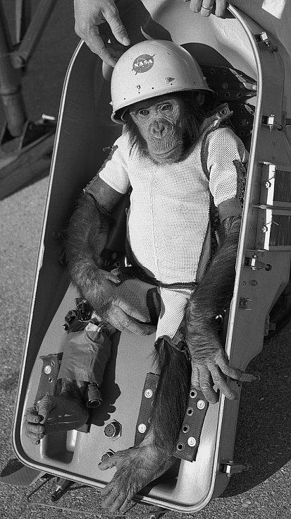 Ve skafandru byl šimpanz Ham umístěn do lehátka kosmické návratové kabiny rakety Mercury-Redstone 2, s níž 31. ledna 1961 absolvoval zkušební let do vesmíru