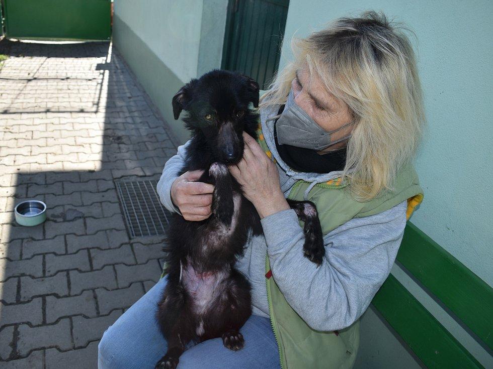Fenka Nelinka, která byla nalezena na Klatovsku ve velmi zuboženém stavu, s čumáčkem přelepeným izolační páskou, se zotavuje v klatovském útulku v péči Miloslavy Šeflové.