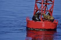 Vědci používají k monitorování oceánů i speciální bóje (ilustrační snímek).