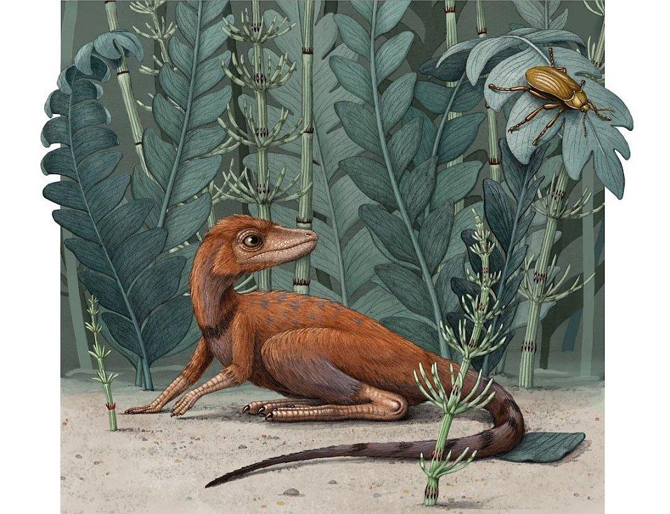 Drobounký hmyzožrout Kongonaphon kely v představě výtvarnice Alex Boersmaové