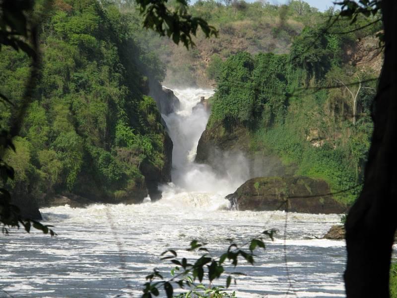 Divočina v Ugandě