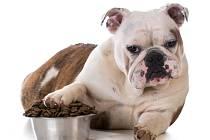 Psi by se neměli krmit pouze granulemi.