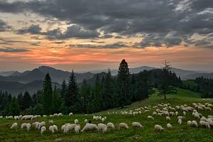 Národní park Pieniny je nejmenším slovenským národním parkem. Oblast je rozdělená mezi Slovensko a Polsko.