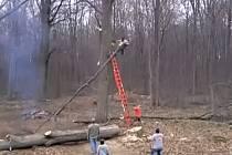 Odřezávání větve ze stromu se změnilo v boj o život.