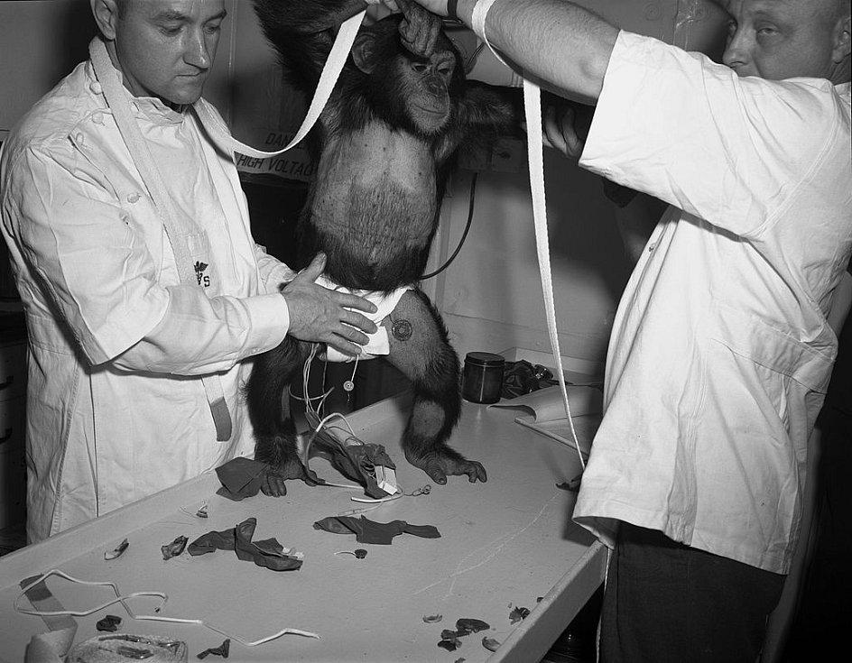 Před zkušebním letem museli asistenti obléci šimpanze Hama do skafandru