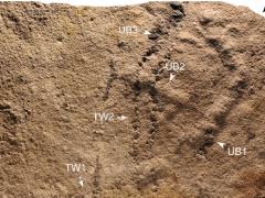 Nejstarší otisky končetin, které byly nalezeny v Číně