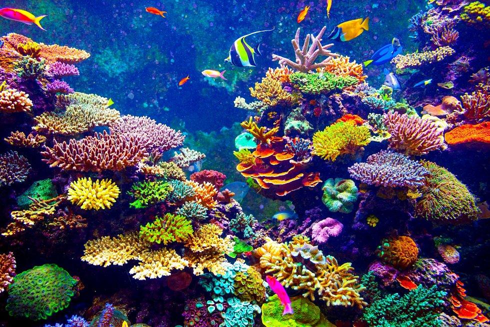 Korálové útesy.