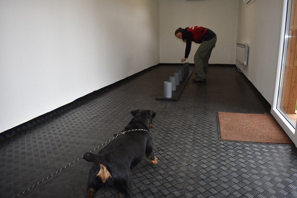 Pro psy je testování zábava, na kterou se těší.