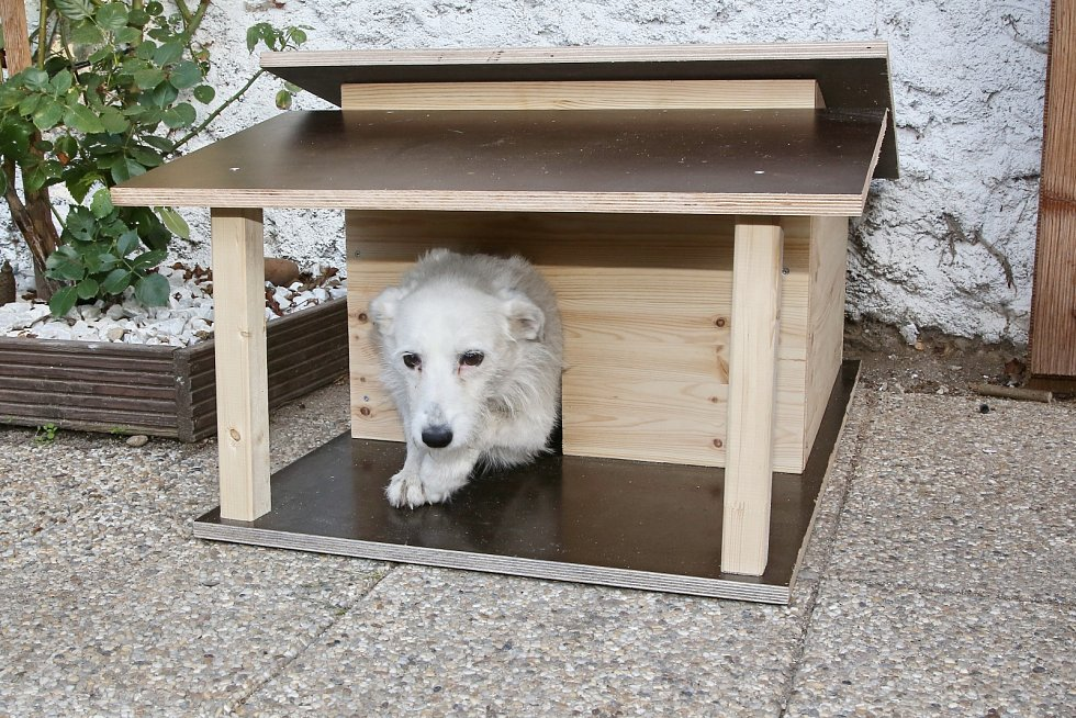 V Receptáři postavili luxusní psí boudu