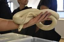 Strach z hadů se jmenuje ofidiofobie.