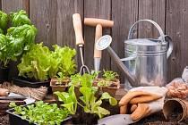 zahradní práce, ilustrační foto