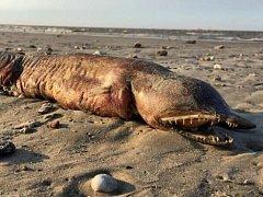 Zubaté stvoření, které objevila Preeti Desaiová na pláži v Texasu