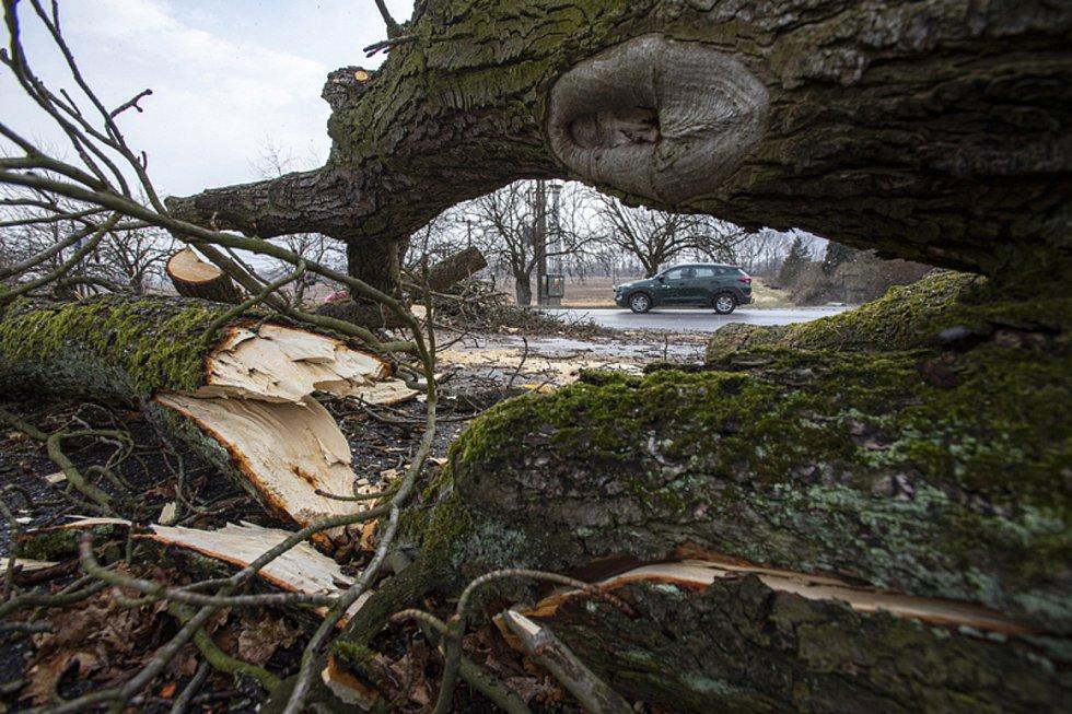 Strom spadlý na silnici kvůli silnému větru. llustrační snímek