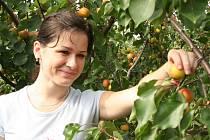 Začátek meruňkové sezony