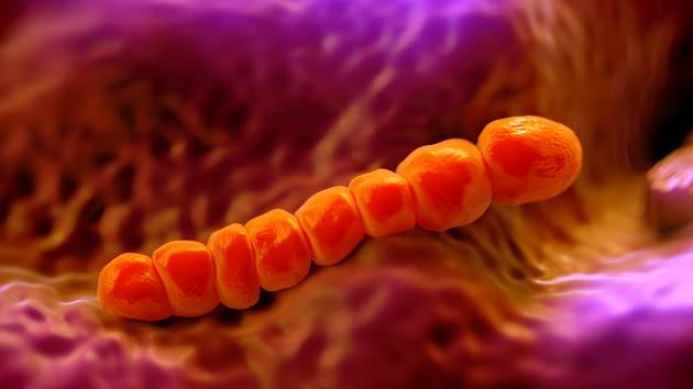 Jihomoravané se bojí zákeřné bakterie. Pneumokok už v kraji zabil dvanáct lidí