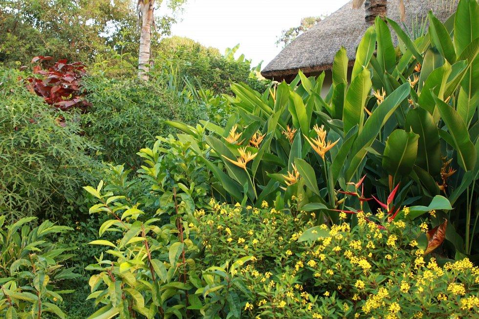 Resort Zuri má charakter tropické bujné zahrady – džungle, v níž nechybí různé druhy koření či ovoce.