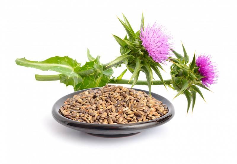 Ostropestřec mariánský – výkonná bylinka, která posiluje činnost jater. Prodává se v tobolkách, ale i jako pasta.