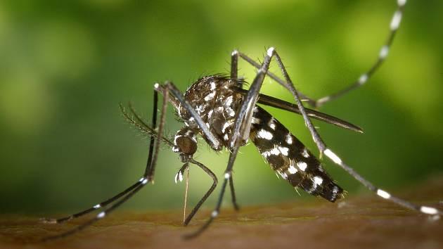 Čas komárů na jižní Moravě vypršel. Do bytů nám ale ještě vlétnout mohou