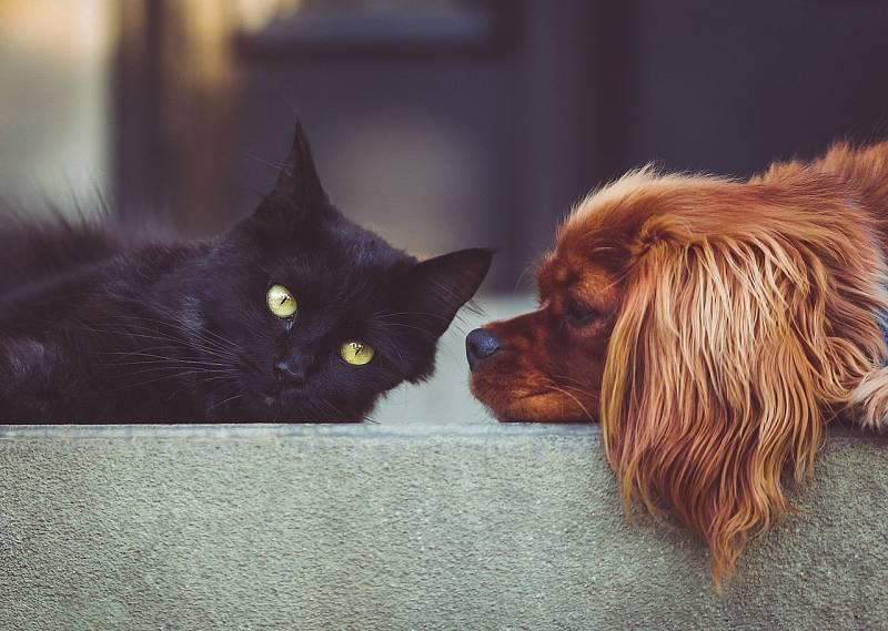 Psi a kočky spí přes deset hodin denně.