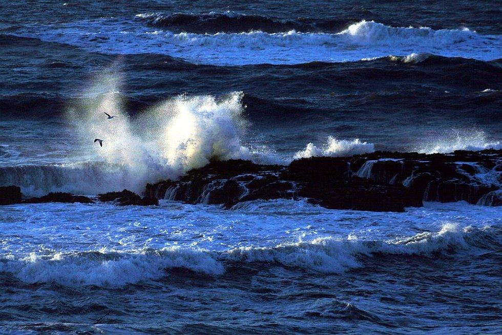 Teplá voda zatím nedorazila k pobřeží, vědci se ale obávají, že může mít na pobřežní ekosystémy dopad