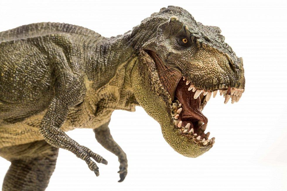 Tyrranosaurus dosahoval  v průměru délku asi 11 až 12,4 metru[7] a hmotnosti kolem 6000 kilogramů.