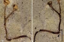 Převratný barrandův nález. který zůstal 150 let zcela nepovšimnut
